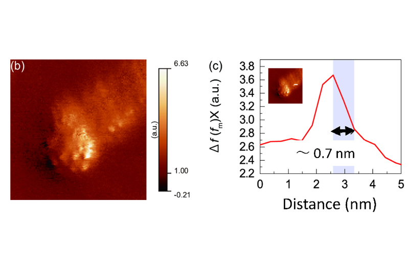 Visualizing Atomic-scale Structures with the Optical Force image